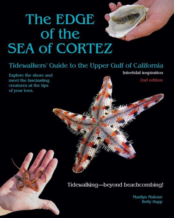 edge of sea of cortez