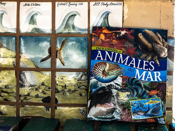 enciclopedia animales del mar