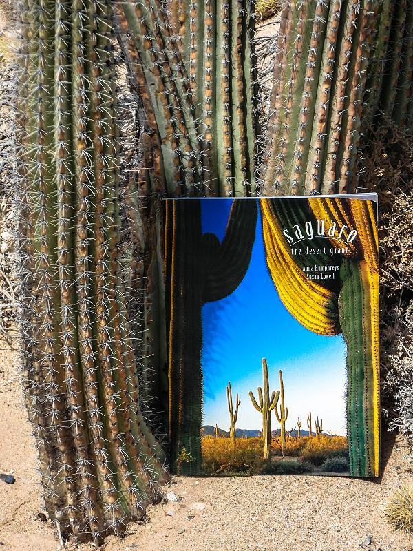 Saguaro the desert giant