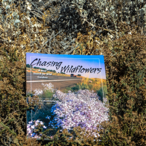 Chasing wildflowers