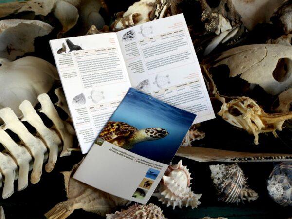 sea turtles and mammals gulf of california