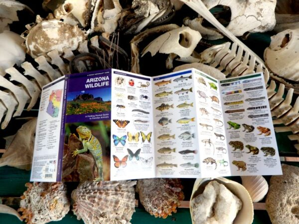 Arizona wildlife guide 1