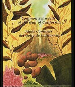 common-seaweeds-gulf-california