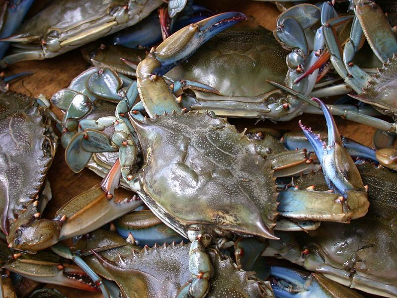Blue crab on market, Photo: Wpopp